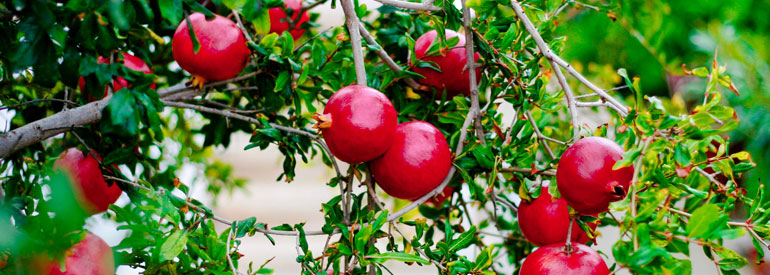 Seasonal products on the table: the surprising pomegranate!