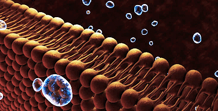 membrana-cellulare