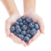 Functional foods: polyphenols in blueberries