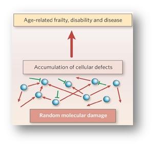 nutrizione molecolare anziano