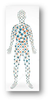 profilo lipidomico
